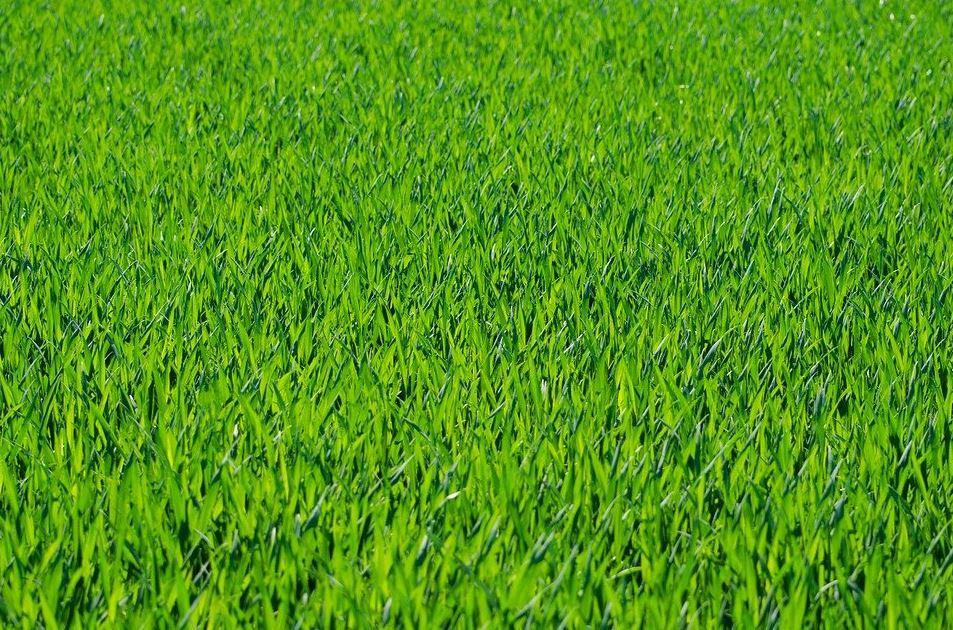 の 青い 隣 芝生 は